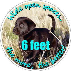 Pets Background (Black Lab Puppy) - Wide open space... the more the better, 6 Feet. Social Distancing Floor Decal (BUNDLE)