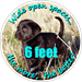 Pets Background (Black Lab Puppy) - Wide open space... the more the better, 6 Feet. Social Distancing Floor Decal (BUNDLE) - ON-2065