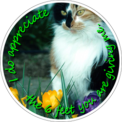 Pets Background (Cat) - I do appreciate the 6 feet you are giving me. Social Distancing Floor Decal (BUNDLE)